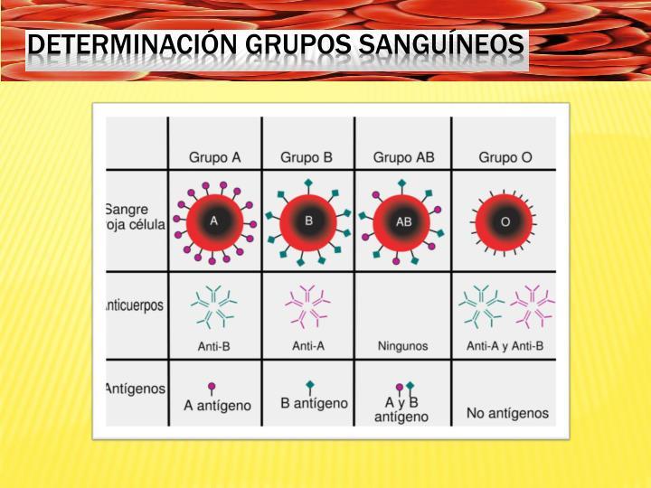 Determinación grupos sanguíneos