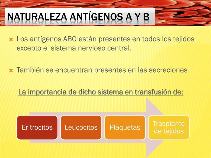 Los antígenos ABO están presentes en