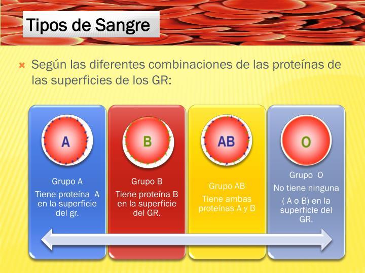 Según las diferentes combinaciones de las proteínas de las superficies de los GR: