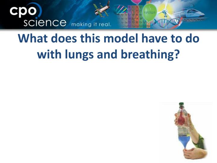 What does this model have to do with lungs and breathing?