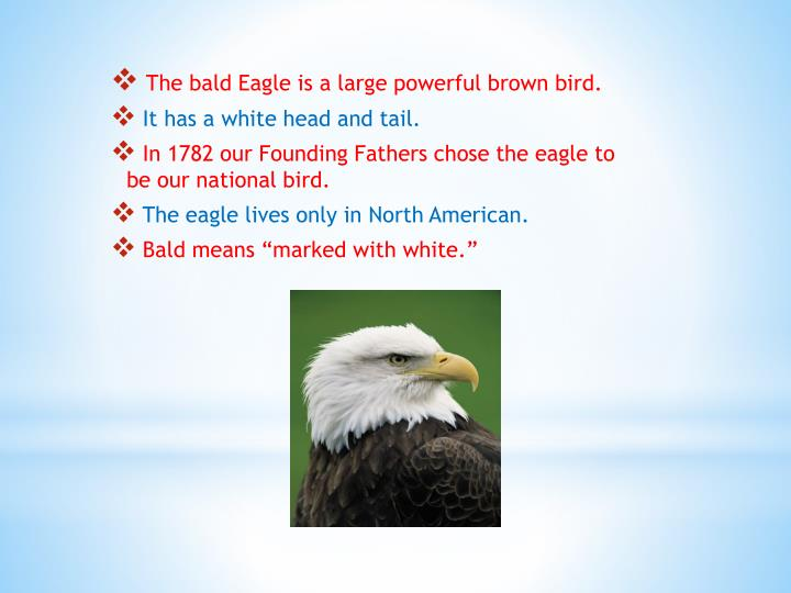 The bald Eagle is a large powerful brown bird.