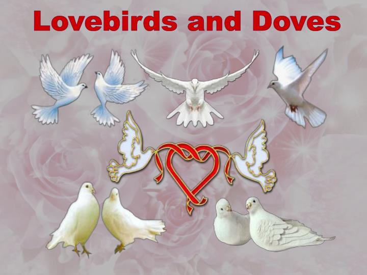 Lovebirds and Doves