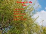changes of my tree