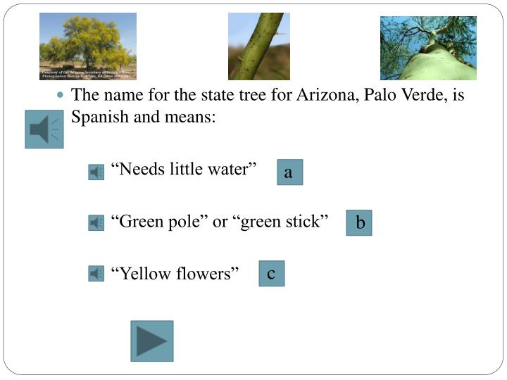 The name for the state tree for