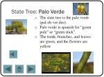 state tree palo verde