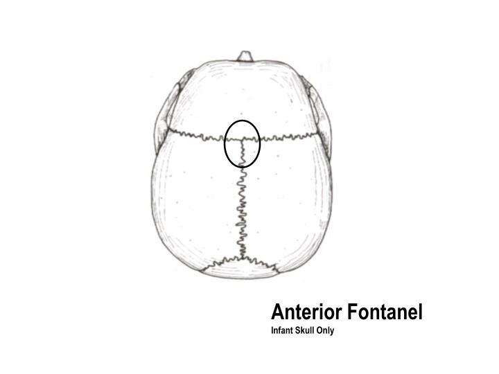 Anterior Fontanel