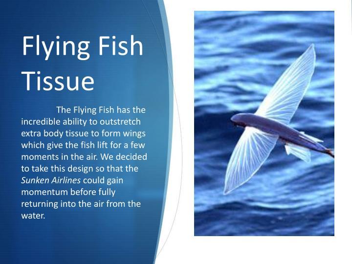 Flying Fish Tissue