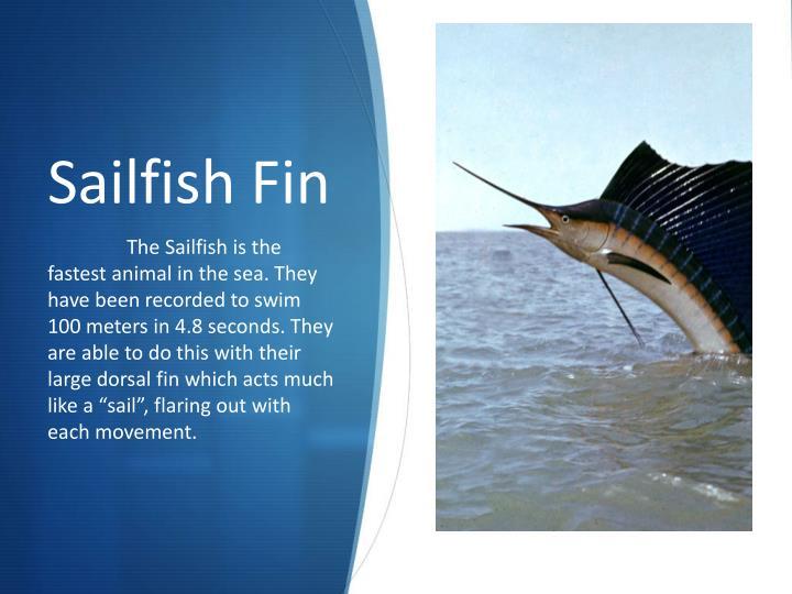 Sailfish Fin
