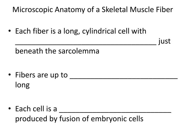 Microscopic Anatomy of a Skeletal Muscle Fiber
