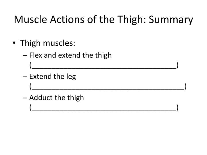 Muscle Actions of the Thigh: Summary