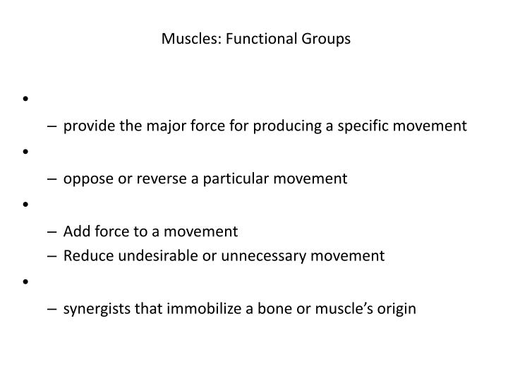 Muscles: Functional Groups