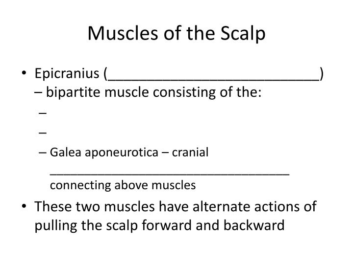 Muscles of the Scalp