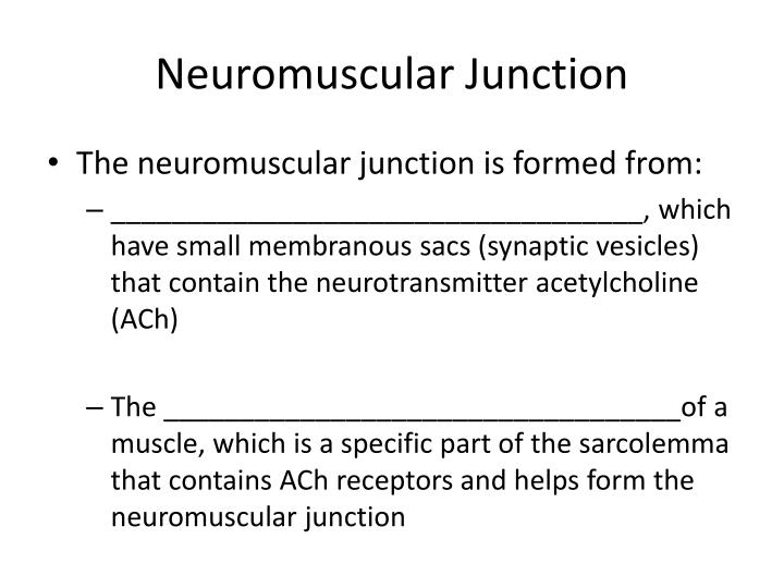 Neuromuscular Junction
