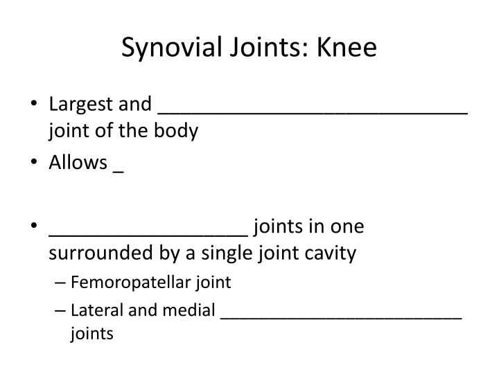 Synovial Joints: Knee