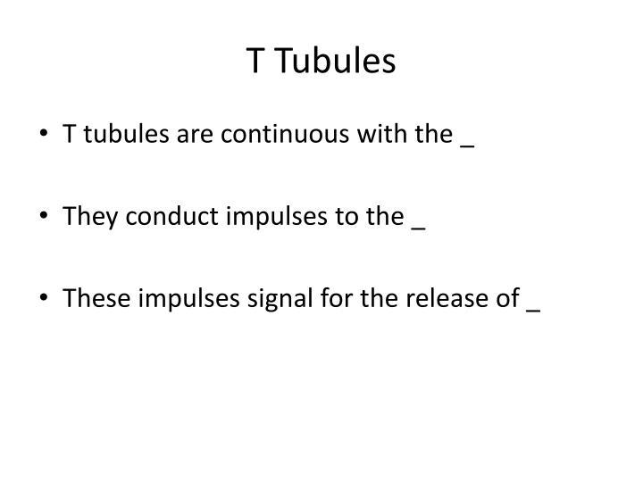 T Tubules