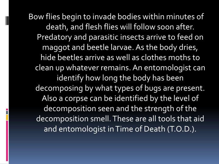 Bow flies begin to invade bodies within minutes of death, and flesh flies