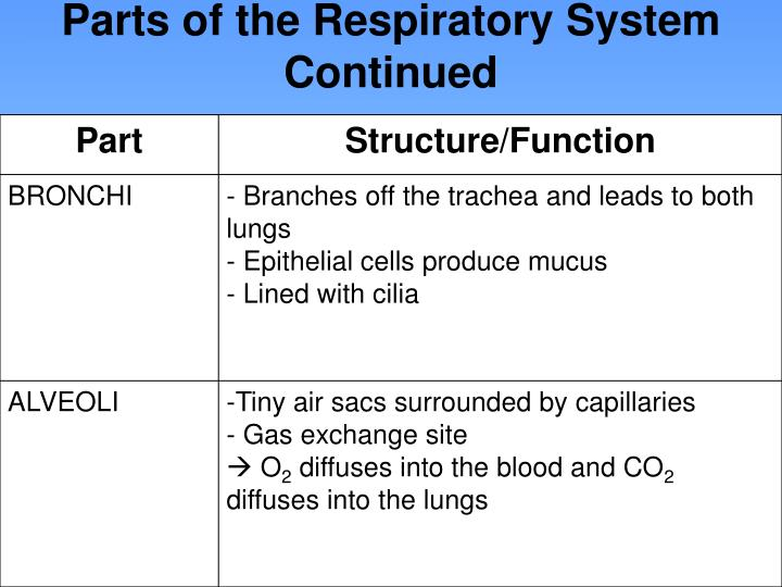 Parts of the Respiratory System Continued