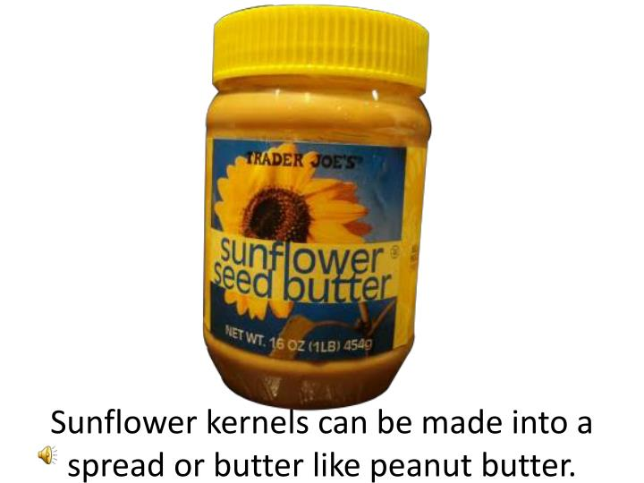 Sunflower kernels can be made into a spread or butter like peanut butter.