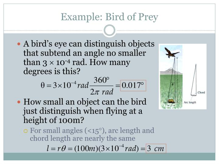 Example: Bird of Prey