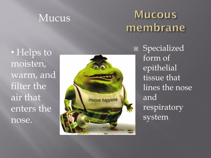 Mucous membrane