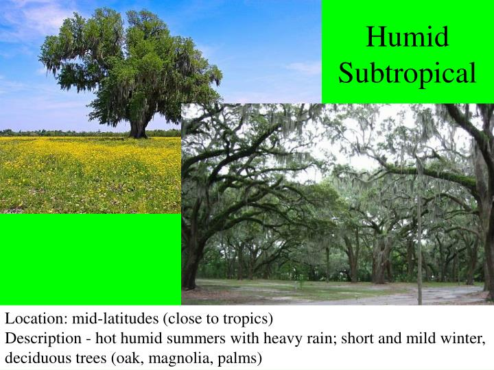 Humid Subtropical