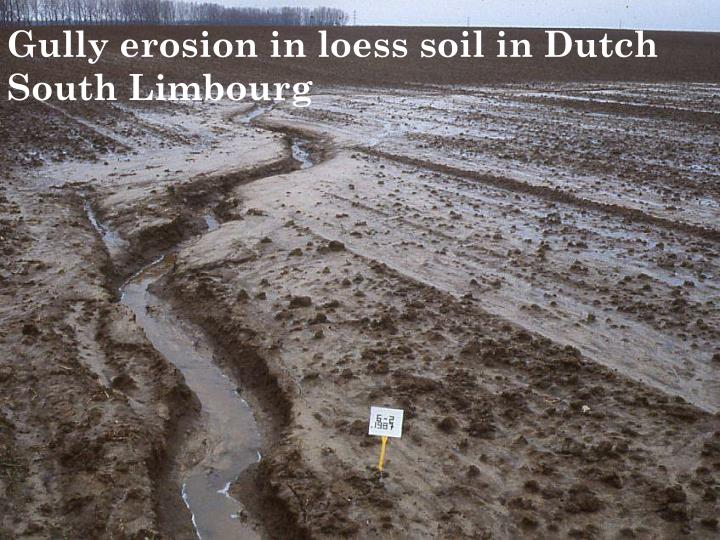 Gully erosion in loess soil in Dutch South