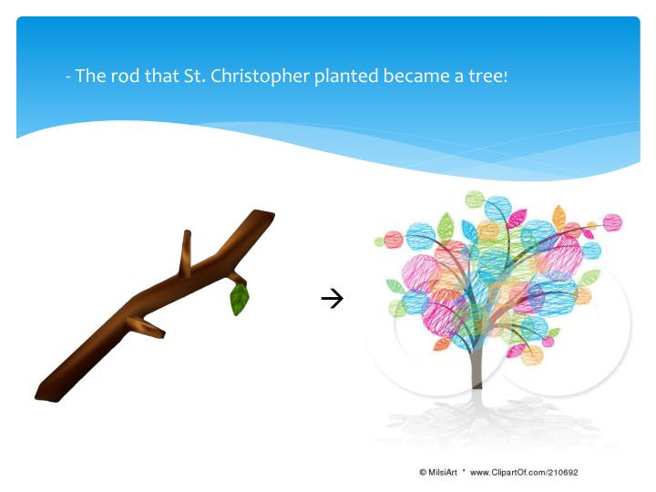 - The rod that St. Christopher planted became a tree