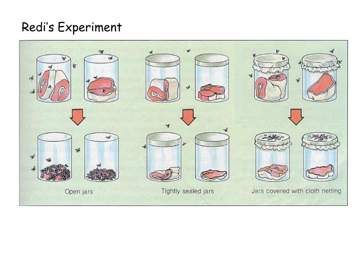 Redi's Experiment