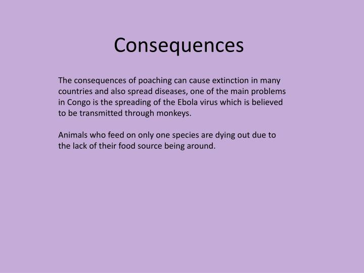 The consequences of poaching can cause extinction in many countries and also spread diseases, one of the main problems in Congo is the spreading of