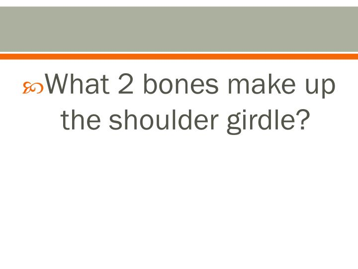 What 2 bones make up the shoulder girdle?