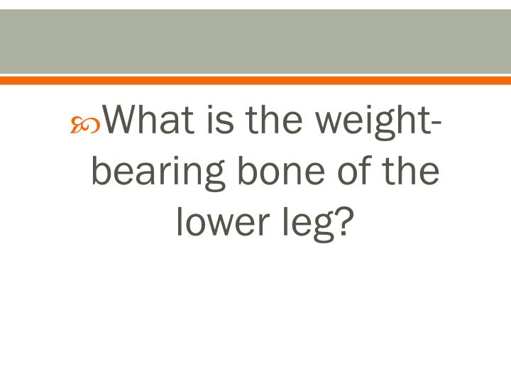 What is the weight-bearing bone of the lower leg?