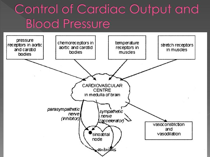 Control of Cardiac Output and Blood Pressure
