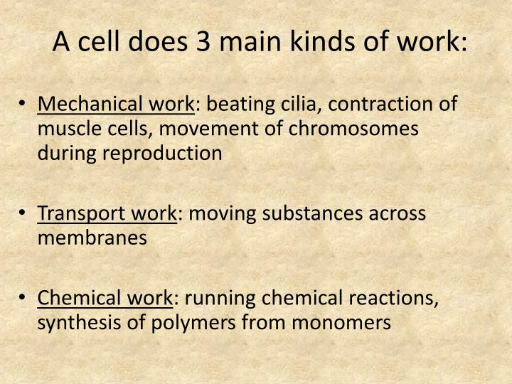 A cell does 3 main kinds of work
