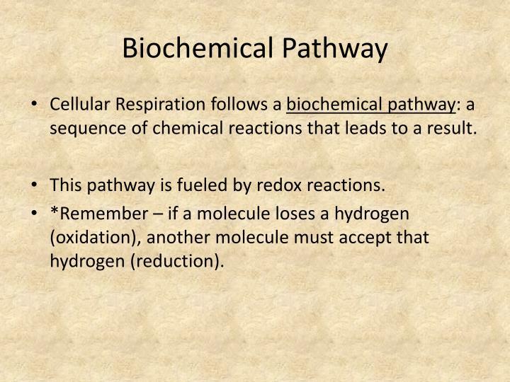 Biochemical Pathway