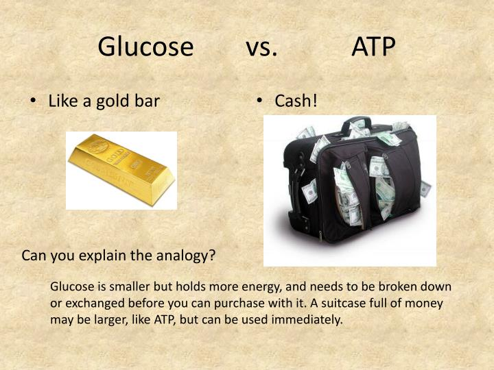 Glucose vs. ATP