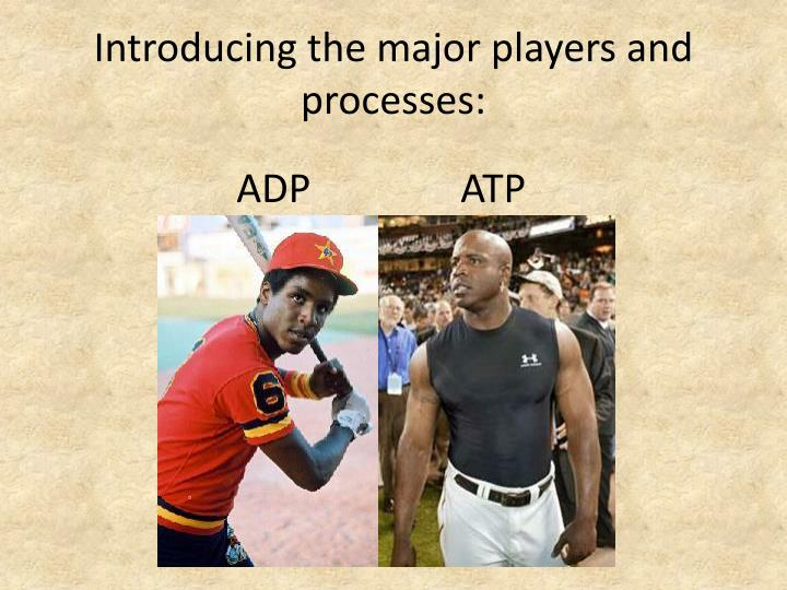 Introducing the major players and processes: