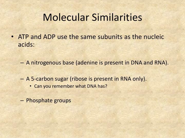 Molecular Similarities
