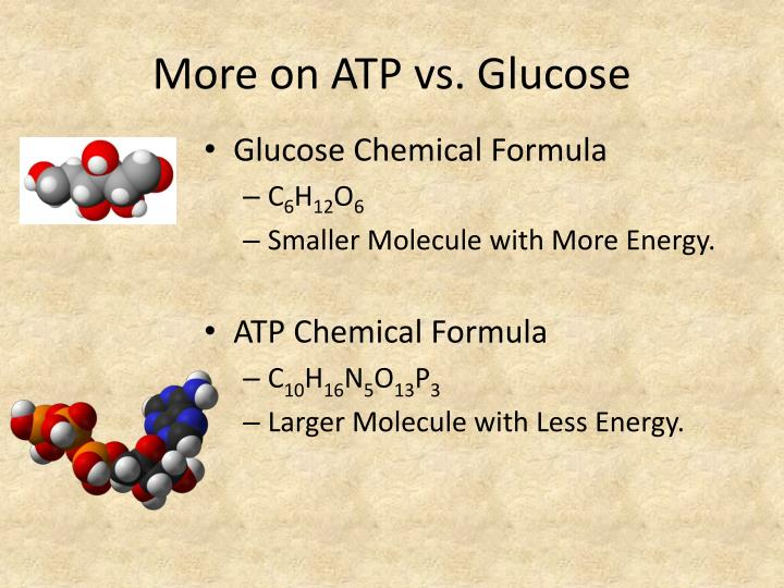 More on ATP vs. Glucose