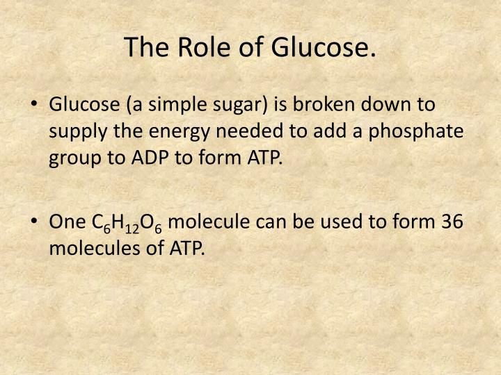 The Role of Glucose.
