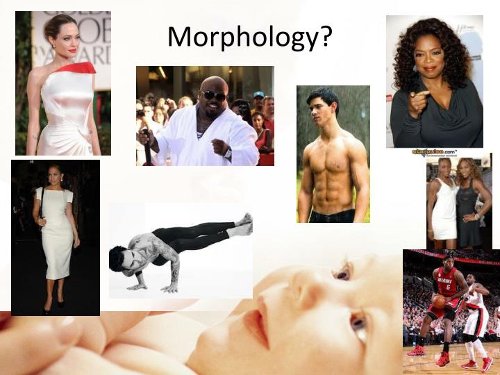 Morphology?