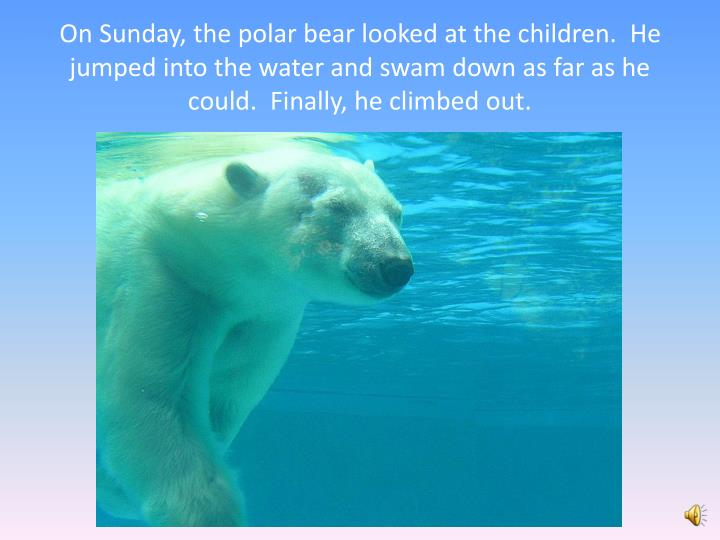 On Sunday, the polar bear looked at the children.  He jumped into the water and swam down as far as he could.  Finally, he climbed out.