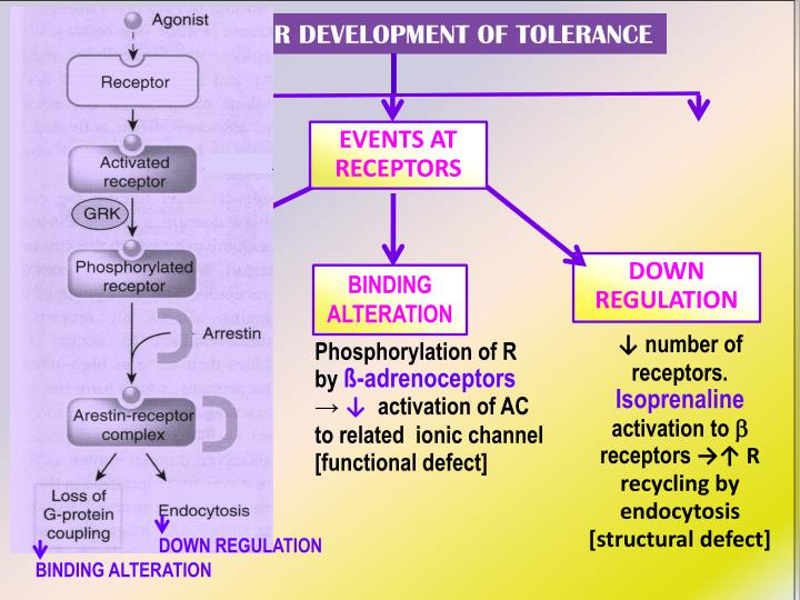 REASONS FOR DEVELOPMENT OF TOLERANCE