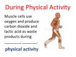 during physical activity1