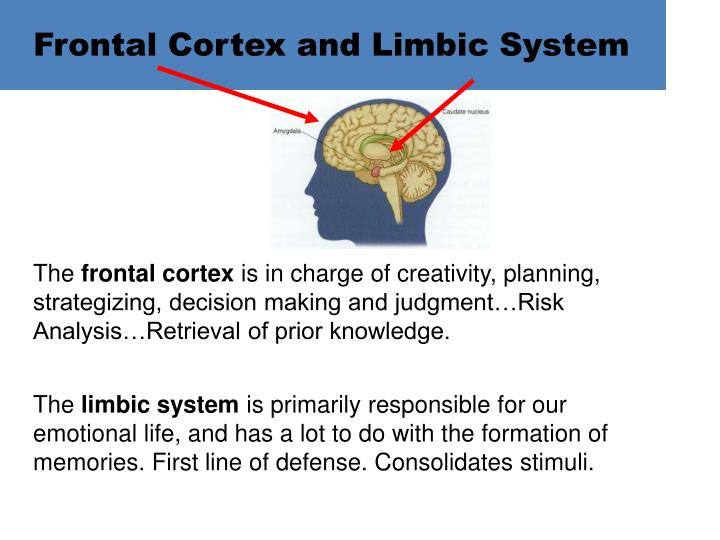 Frontal Cortex and Limbic System