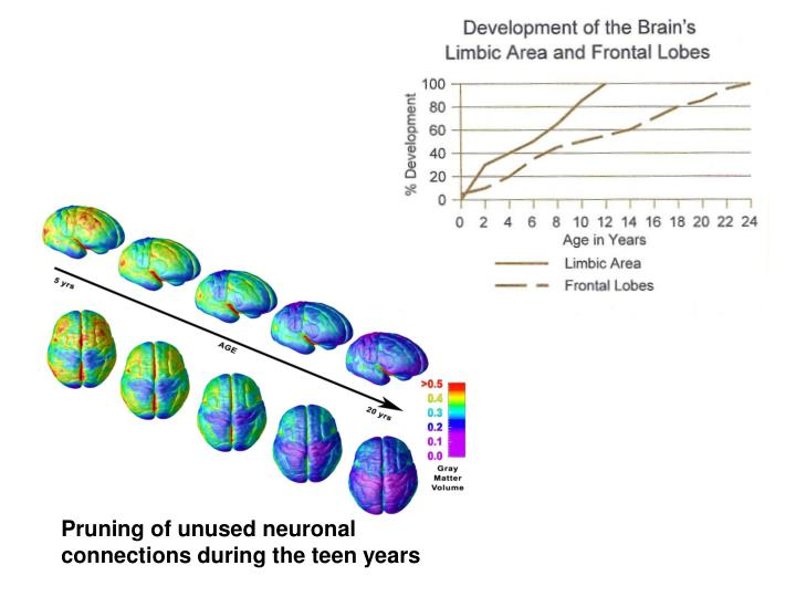 Pruning of unused neuronal connections during the teen years