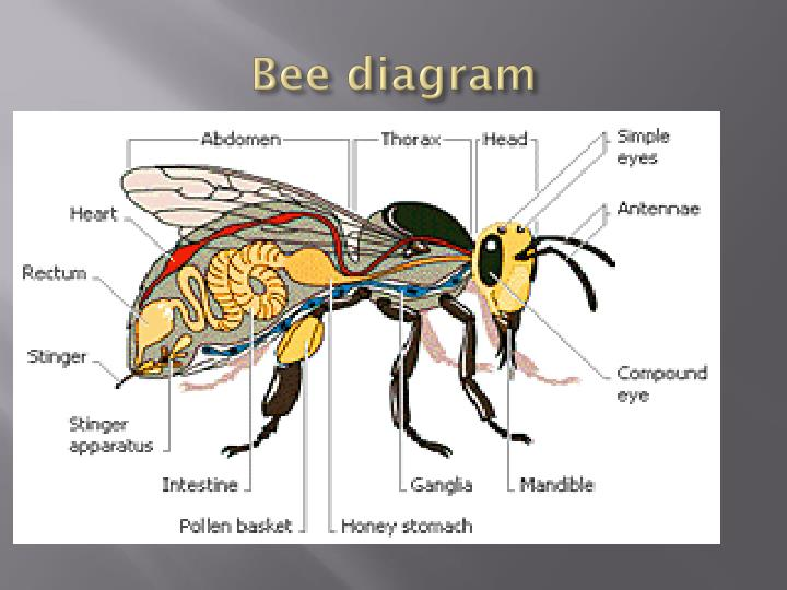 Bee diagram