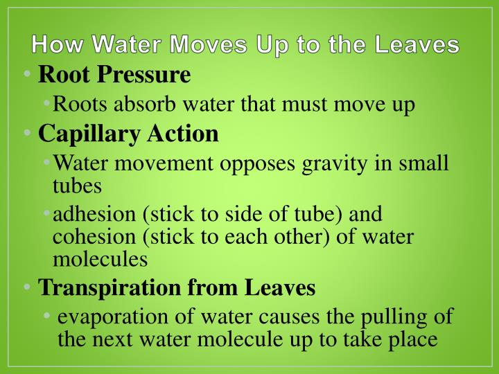 How Water Moves