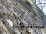 allen project runaway