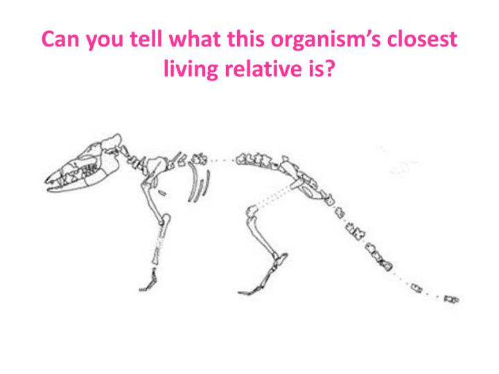 Can you tell what this organism's closest living relative is?
