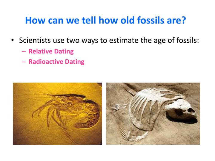 How can we tell how old fossils are?
